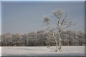 Anmutiger Baum