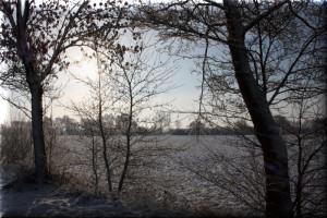 Winterblick durch die Bäume