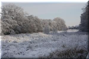 Winteroase im Wohngebeieit