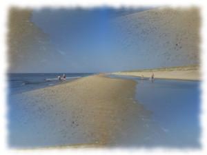 Strandgut suchen