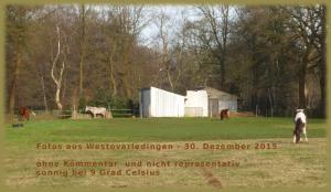 Landschaft WOL 6